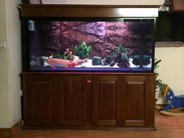 Bể cá rồng phong thủy trong gia đình 1