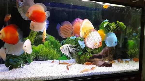 bể cá phong thủy đẹp 2