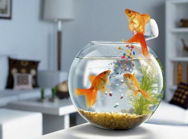 bể cá để bàn xinh xắn 2