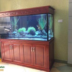 Bể cá rồng cao cấp nhà anh Khánh 1