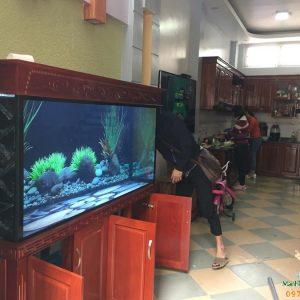 Bể cá rồng cao cấp nhà anh Khánh 3