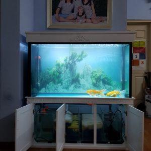 Bể cá rồng nhà anh Linh chung cư CT2A Xa La Hà Đông 2
