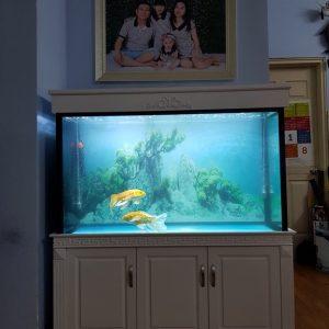 Bể cá rồng nhà anh Linh chung cư CT2A Xa La Hà Đông 3