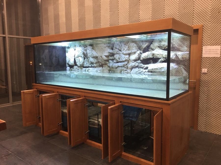 Bể cá rồng nhà anh Thắng Thanh Xuân 1