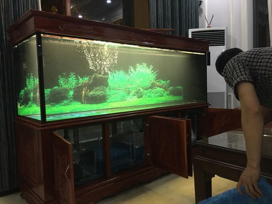 Bể cá rồng nhà anh Trọng TP Việt Trì 2