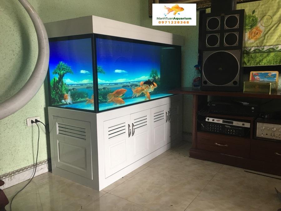 Bể cá rồng nhà anh Sơn Quốc Oai 1