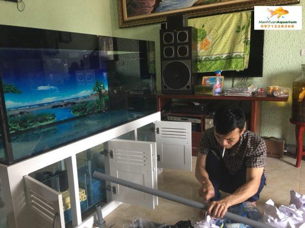 Bể cá rồng nhà anh Sơn Quốc Oai 2