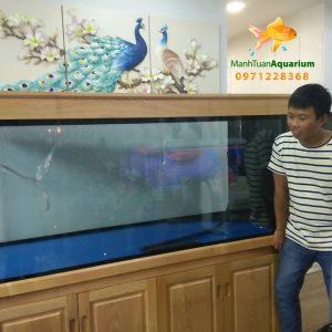 Bể cá rồng nhà anh Trung tại chung cư Nguyễn Tuân 2
