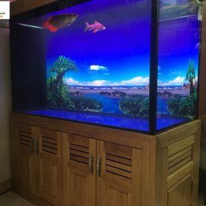 Bể cá rồng nhà anh Tuấn – Trần Điền Lê Trọng Tấn 1