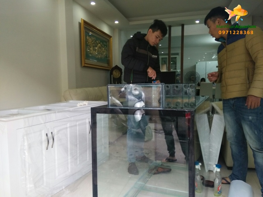 Bể cá rồng chị Hương nhà bán đảo Linh Đàm 2