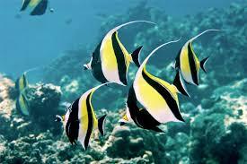 Bật mí tuyệt chiêu cho cá cảnh biển ăn đúng cách