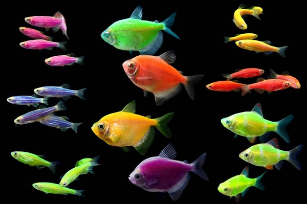cá thủy sinh 4