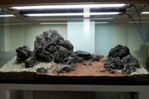các loại đá bể thủy sinh   6