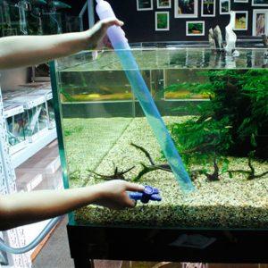 Cách thay nước bể cá  2