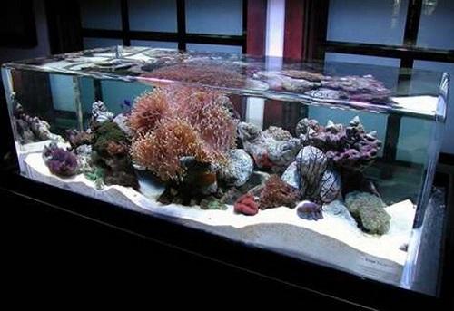 Địa chỉ mua bán bể cá cảnh 1