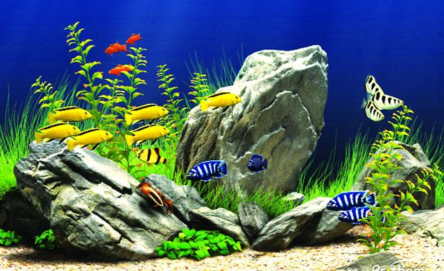 dịch vụ vệ sinh bể cá 3