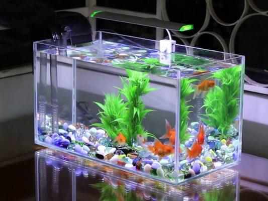 Những lưu ý khi thay nước bể cá cảnh 1 Những lưu ý khi thay nước bể cá cảnh