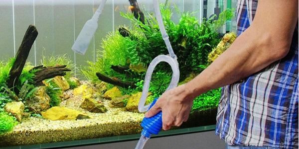 thay nước bể cá cảnh 1