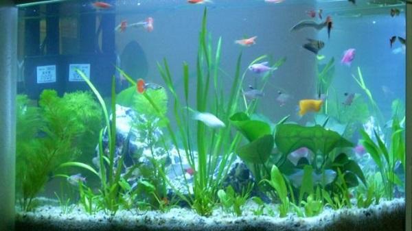 thay nước bể cá cảnh 3
