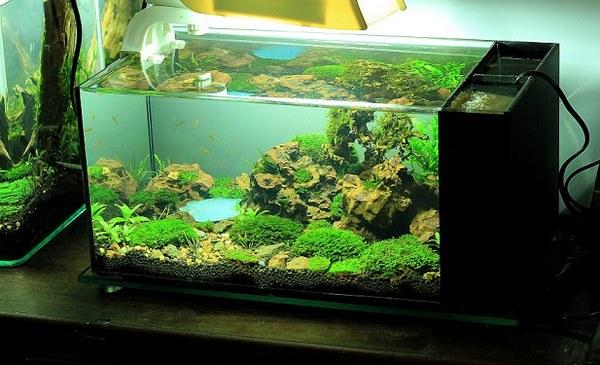 mẫu bể cá đẹp 2
