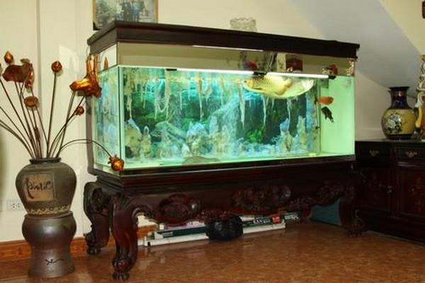 bể cá cảnh hà nội 2