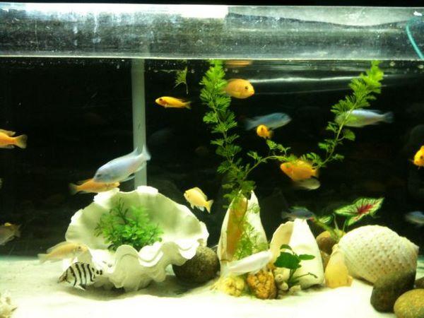 bể cá treo tường 1 Bể cá treo tường nên nuôi cá gì tiết kiệm công chăm sóc
