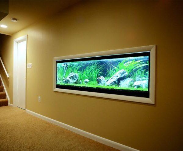bể cá âm tường 1