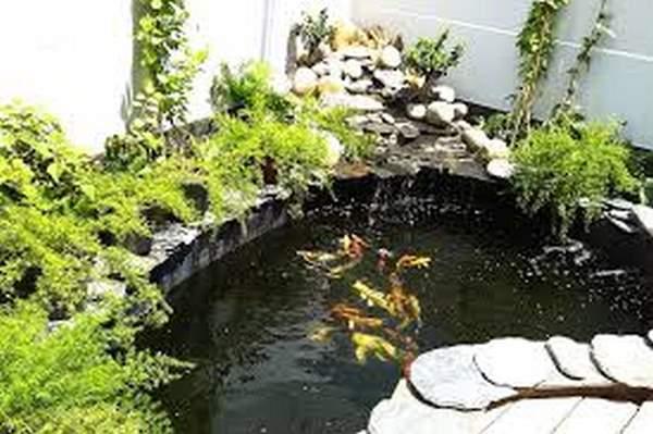 thiết kế bể cá cảnh 1