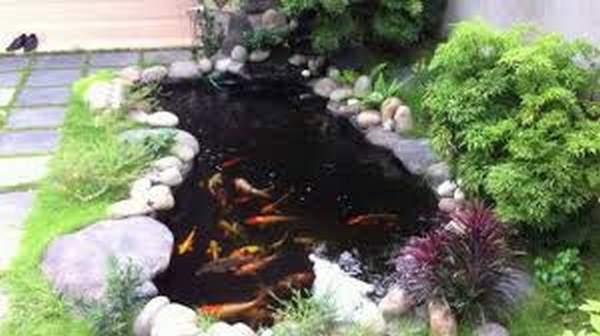 thiết kế bể cá cảnh 2
