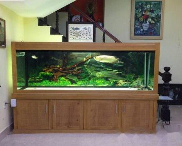 thiết kế bể cá 1 3 mẫu thiết kế bể cá rồng đẹp, hợp phong thủy