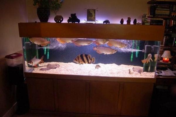 thiết kế bể cá 4 3 mẫu thiết kế bể cá rồng đẹp, hợp phong thủy