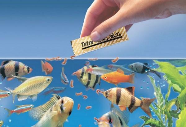 bể cá thủy sinh hà nội 4