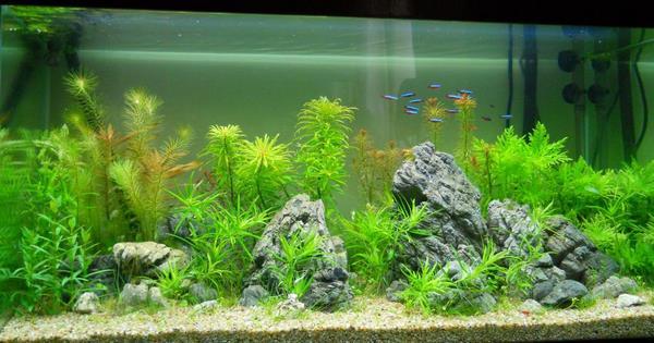 bể cá thủy sinh 1