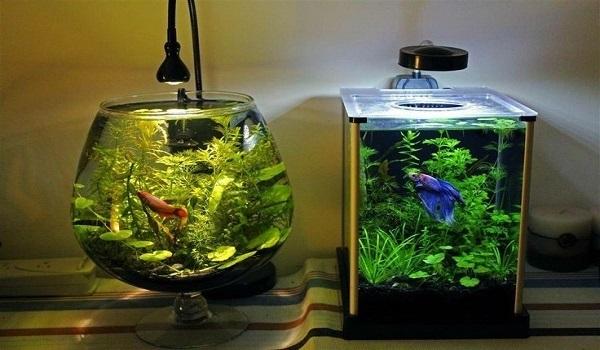 bể cá thủy sinh 2
