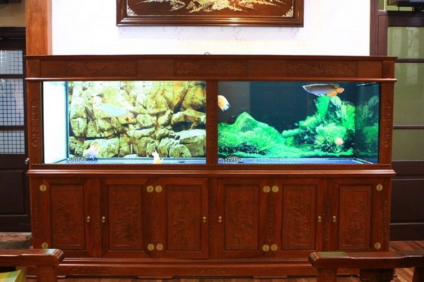 bể cá rồng giá rẻ 1 Mua bể cá rồng giá rẻ Hà Nội – nên hay không nên?