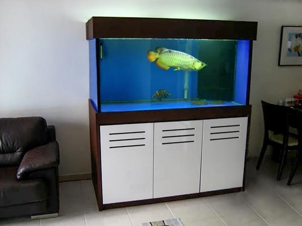 bể cá rồng giá rẻ 2