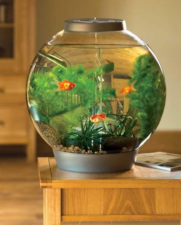 bể cá cảnh để bàn 3 Bể cá cảnh để bàn làm việc giúp tăng vượng khí, ích tài lộc