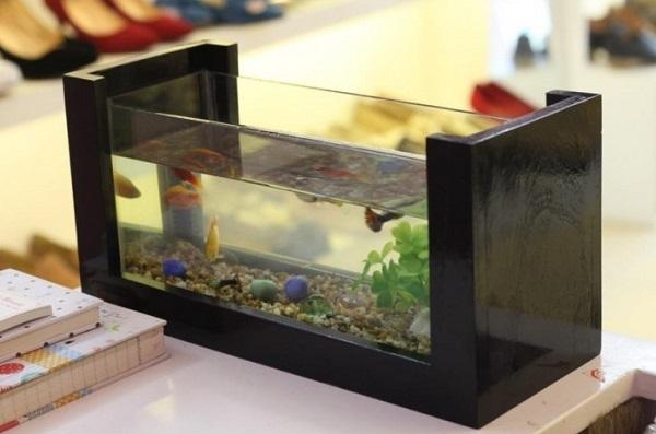 bể cá cảnh để bàn 4 Bể cá cảnh để bàn làm việc giúp tăng vượng khí, ích tài lộc