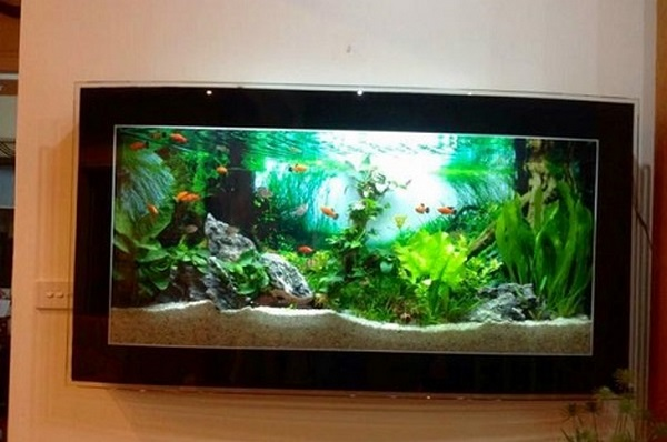 mua bán bể cá cảnh 1 Mua bán bể cá cảnh Hà Nội giá rẻ