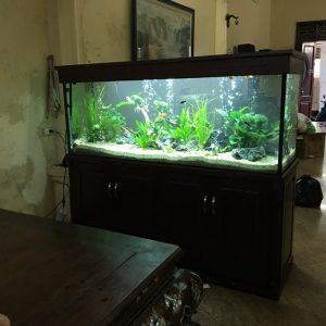 Bể cá thủy sinh bên Linh Hiệp Gia Lâm 1