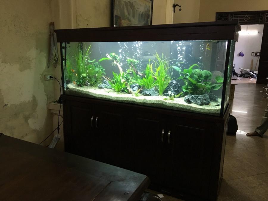 Bể cá thủy sinh bên Linh Hiệp Gia Lâm 2