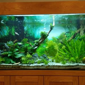 Bể cá thủy sinh cây thật 1