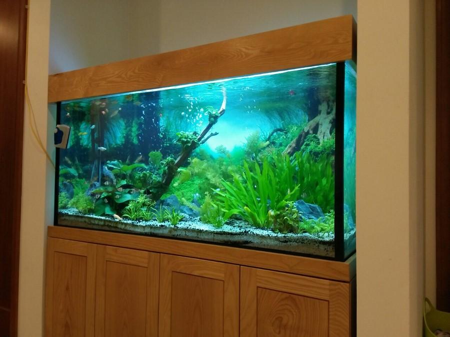 Bể cá thủy sinh cây thật 2