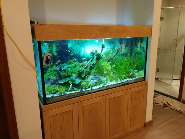 Bể cá thủy sinh cây thật 3