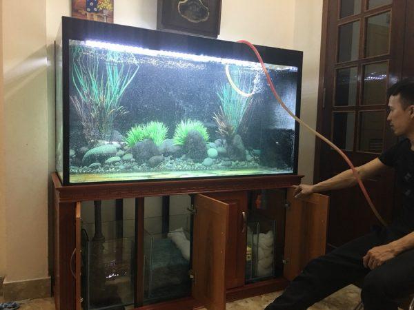 Bể cá rồng nhà chú Dũng Thái Hà