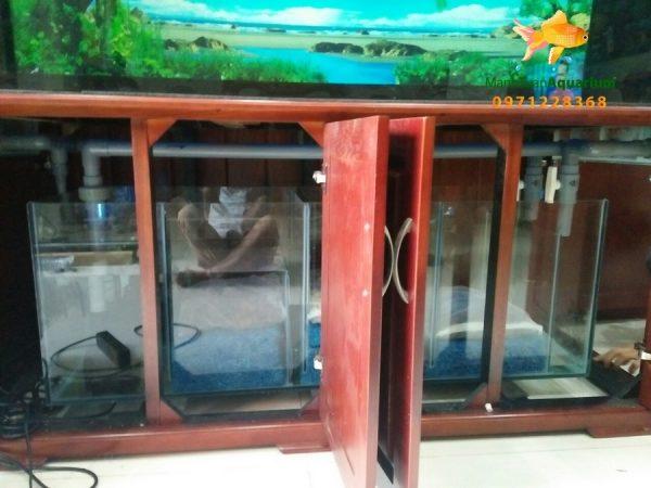 Bể cá rồng nhà chú Lãm tại Biệt thự Mỹ Đình 1
