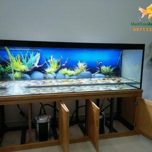 Bể cá rồng tại phòng khám Tâm An 1