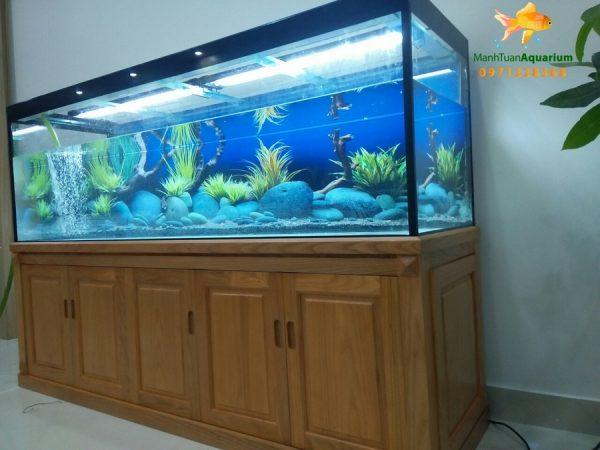Bể cá rồng tại phòng khám Tâm An 2