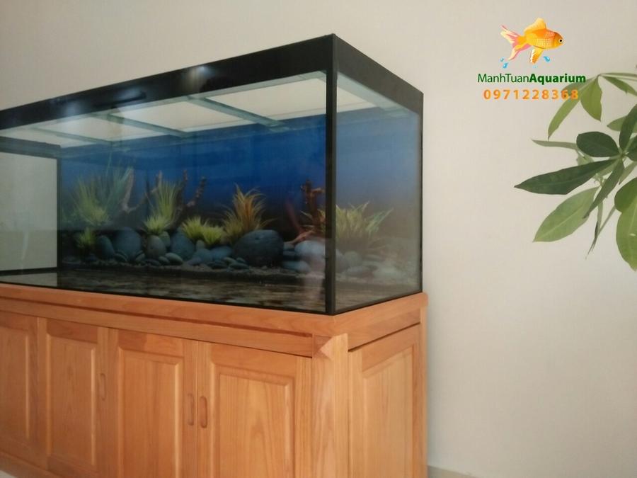 Bể cá rồng tại phòng khám Tâm An 3