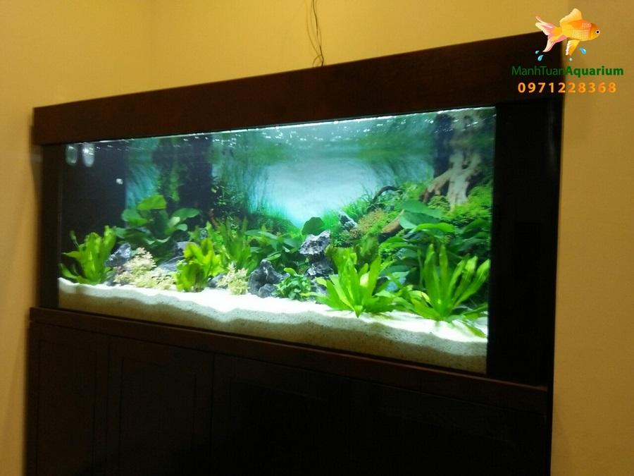 Bể cá thủy sinh nhà anh Tùng 2